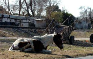 El caballo maltratado por su dueño.