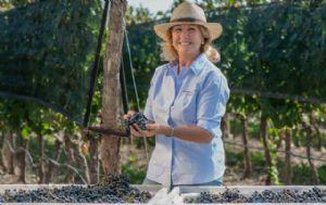 El 80% de los vinos que se consumen en el país tienen un valor promedio de $21,67.