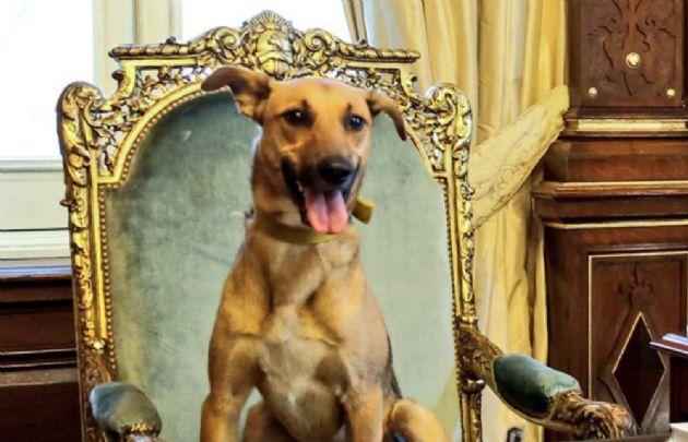 Resultado de imagen para perro Balcarce