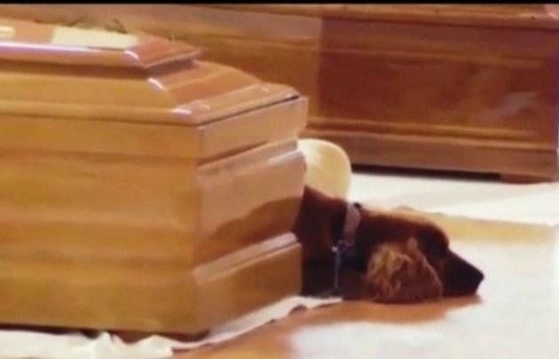 Un perro llora la muerte de su dueño tras el terremoto en Italia