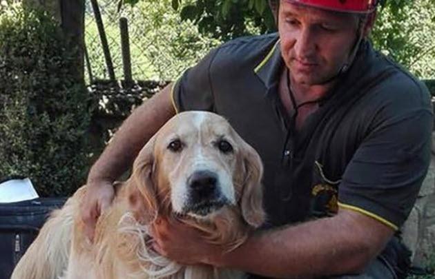 Rescataron a un perro luego de estar 10 días sepultado por el sismo en Italia.