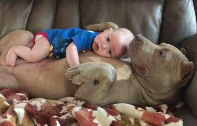 Enternece al mundo el perro que cuida al bebé