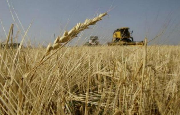 El área de trigo pasará en la actual campaña a 5,5 millones de hectáreas.