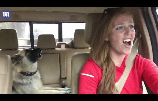 Una perra y su dueña cantan Queen en el auto
