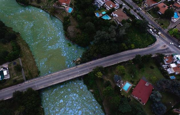 Algas en el San Roque.
