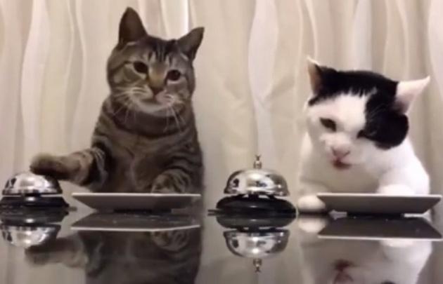 Los gatitos divierten a las redes sociales y son virales en Internet.
