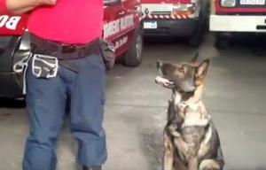 El can está especializado en el rastreo de cuerpos.