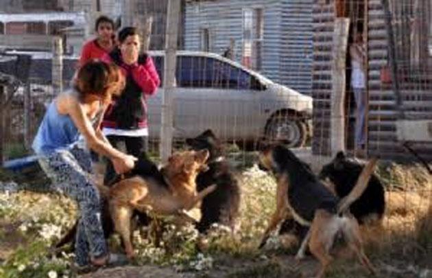 Preocupación por jaurías de cimarrones en Ushuaia.
