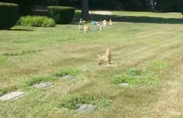 El supuesto animal estaba sentado sobre su propia tumba.