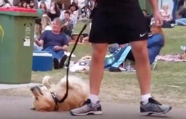 El can generó sensación en las redes sociales.