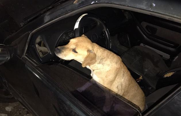 El perro acompañaba al conductor, que finalmente lo terminó dejando.