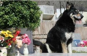 Capitán el perro que se quedaba junto a la tumba de su dueño.