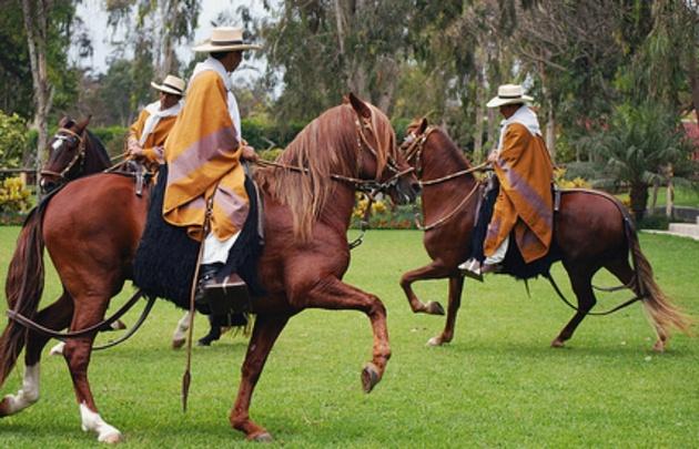 Caballos peruanos