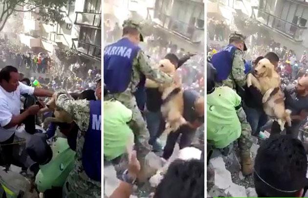 Rescataron a un perro entre los escombros tras el terremoto.