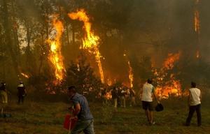 Las llamas arrasaron miles de hectáreas en Galicia.
