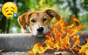 Una perra volvió por su cachorro tras el incendio (Fotomontaje)