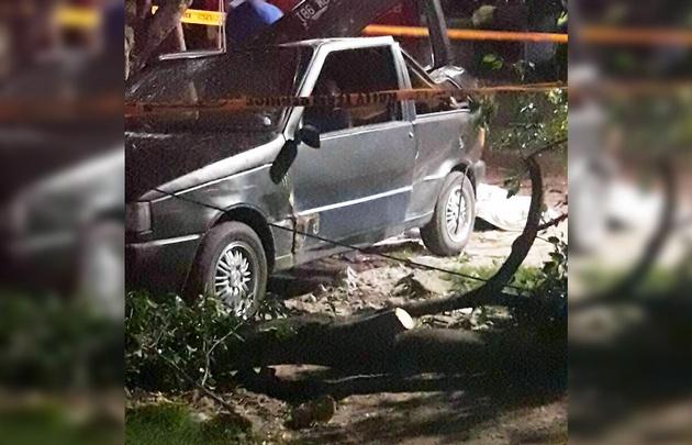 El ficus cayó encima del auto y mató a su propietario.