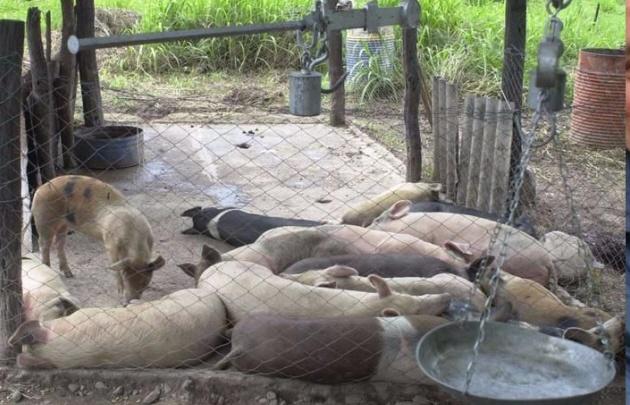 El hecho ocurrió en un criadero de cerdos ubicado a la vera del rió San Francisco.
