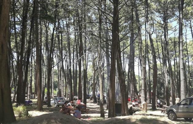 Un bosque entre las dunas, un paisaje imponente de Miramar