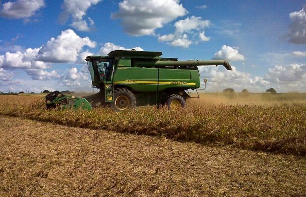Estiman que por la sequía, la producción de soja bajará 30%