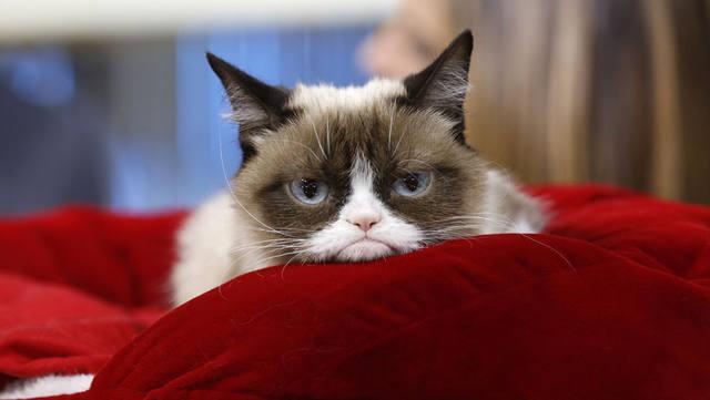 FOTO: Falleció la gata más influyente del mundo