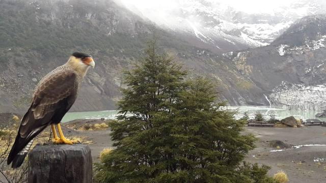 FOTO: De los 7 glaciares al Tronador, un imperdible en Bariloche