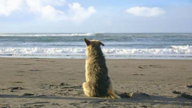 AUDIO: La atacaron perros en la playa y entró al mar para salvarse