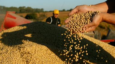 AUDIO: Expectativas por el escenario alcista en la soja y el maíz
