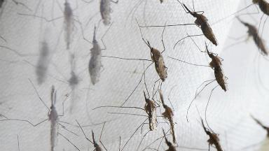 AUDIO: Preocupa la plaga de mosquitos en el nordeste cordobés