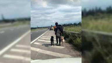 """AUDIO: Viajó 1.200 km """"a dedo"""" por amor a sus perros"""