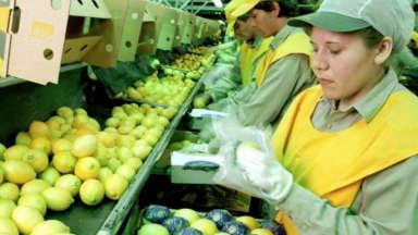 AUDIO: Se levantó en Tucumán el paro que impedía exportar limones