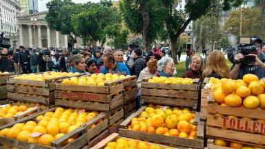 AUDIO: Porductores regionales dan frutas gratis en Plaza de Mayo