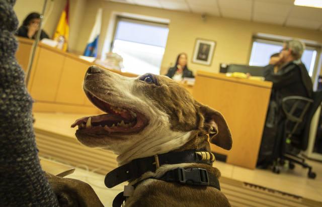 FOTO: Una perra asiste al juicio de su propio maltrato en España