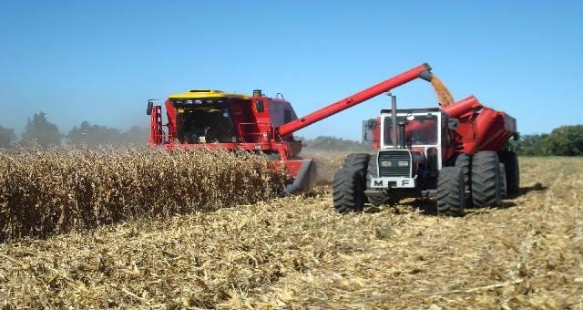 FOTO: La molienda de maíz es una de las actividades agroindustriales con mayor valor agregado.