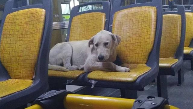 FOTO: Apolo, el perro perdido que vivía en los colectivos urbanos