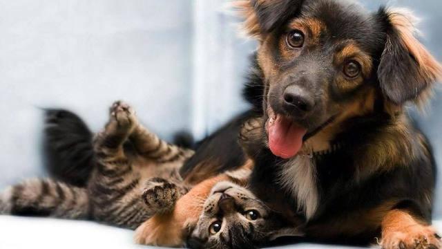 FOTO: Por qué se conmemora hoy el Día del Animal