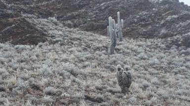 AUDIO: Purmamarca se disfrazó de blanco con la llegada de la nieve