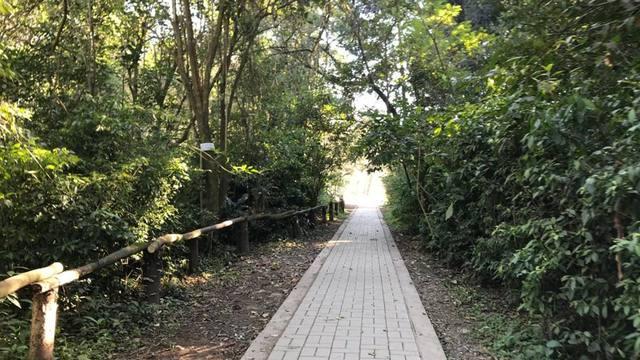 FOTO: Reserva Horco Molle, 200 hectáreas protegidas de selva