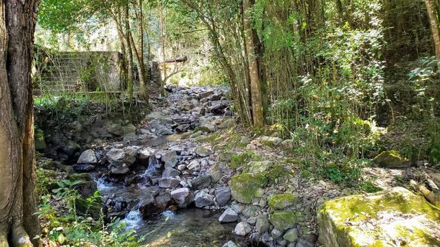 FOTO: San Lorenzo, un paraíso para más de 200 especies de aves