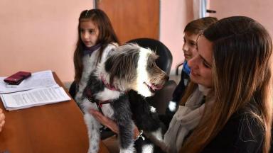 AUDIO: Cosquín exime de impuestos a quien adopte perros callejeros