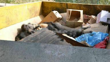 AUDIO: Matanza de perros: absuelven al ex intendente de Deán Funes