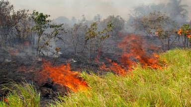 AUDIO: Incendios en Bolivia quemaron 900 mil hectáreas en dos meses