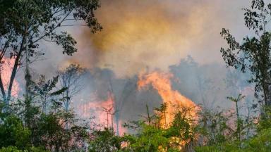 AUDIO: Así será el operativo de los bomberos que viajan a Amazonia