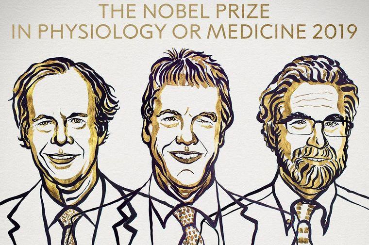 Se anuncia el ganador del Premio Nobel de Medicina 2019 — En directo