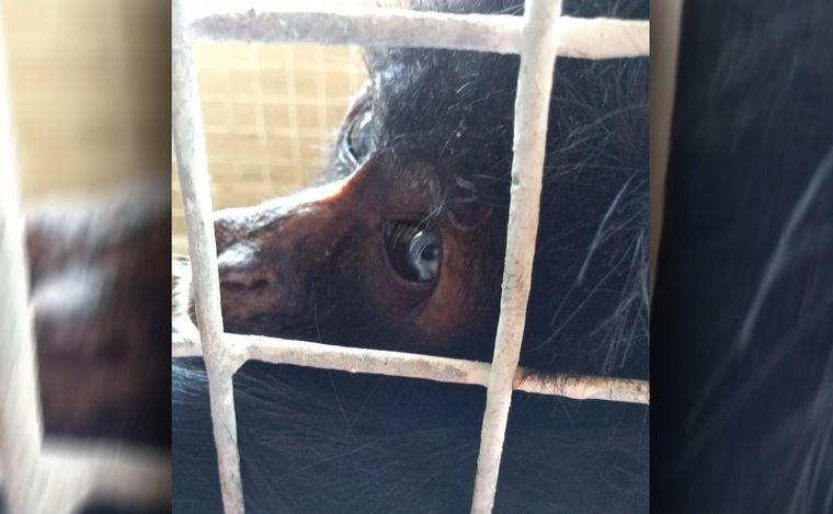 FOTO: Monos