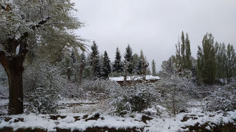 FOTO: Nieve en Mendoza.