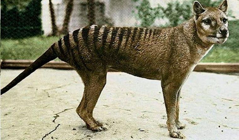 Aseguran haber visto a un animal que se creía extinguido