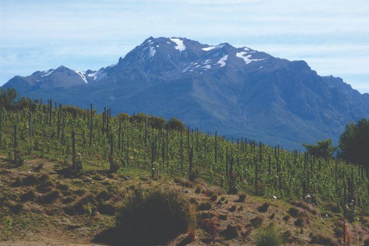 FOTO: Viñas de Nant y Fall en Trevelin, Chubut