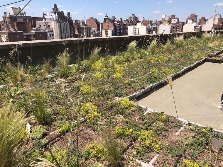 FOTO: Techo verde de la municipalidad