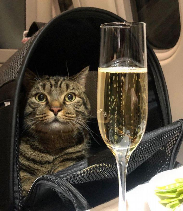 El engaño por un gato